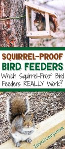 Squirrel PROOF Bird Feeders - Do they really WORK? Which squirrel proof bird feeders are best?